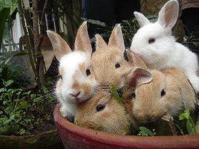 http://lh6.ggpht.com/__iHgDrjwaSE/Sh6dSSHCXEI/AAAAAAAAG_I/zsgmTyPH72U/bebes-conejo-tiesto.jpg