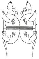 ewcortar (3)