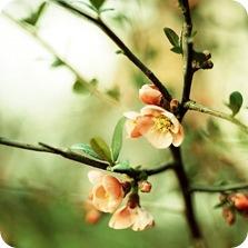 0829_hail_to_spring