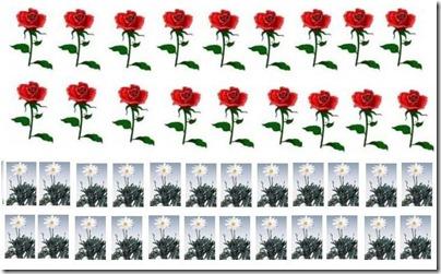 rosemargherite