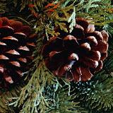 Christmas (10).jpg