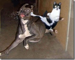 cat-dog-funny