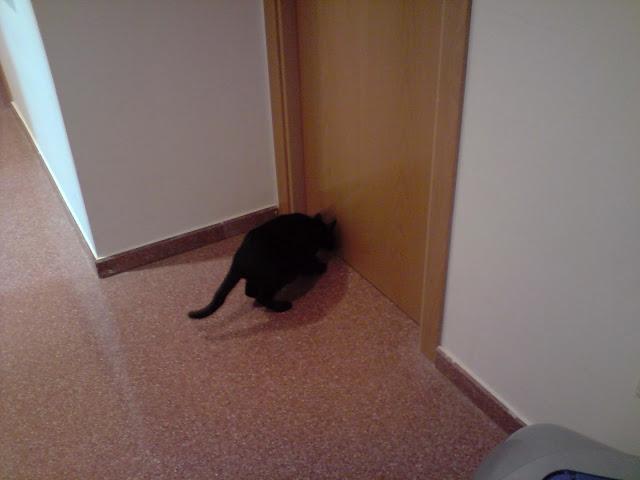 ¡¡¡Pepita ya está en casaaaaaaaaaaaaa!!!! :D P240410_08.16