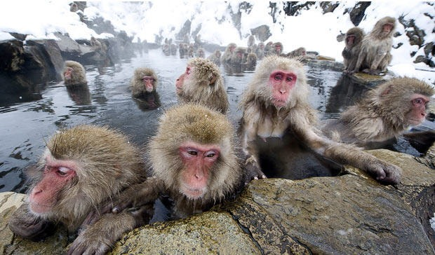snow-monkeys (1)