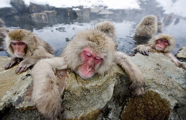 snow-monkeys (10)