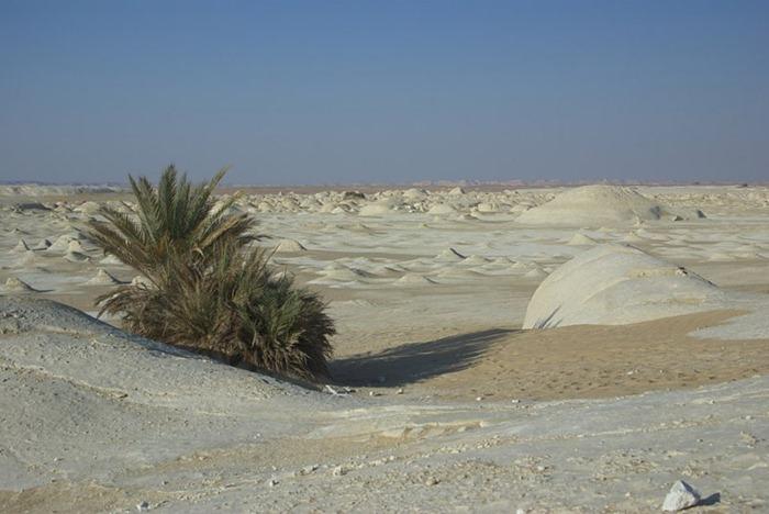 white-desert (5)