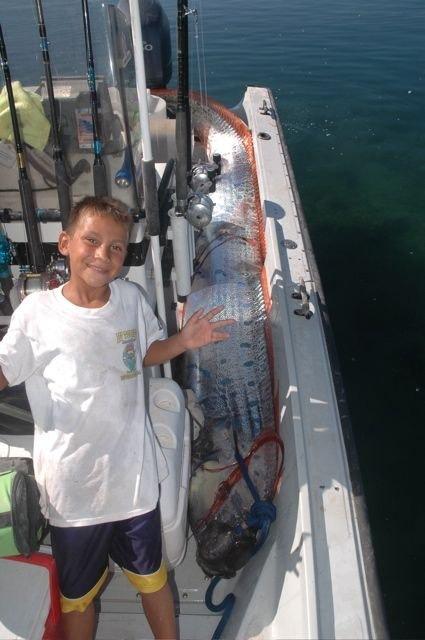 oarfish (15)