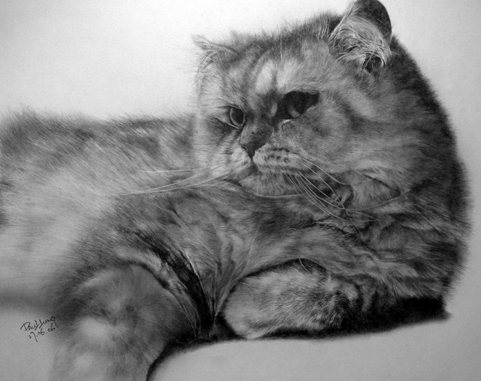 Cat_drawing