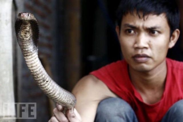 snake-burger (3)