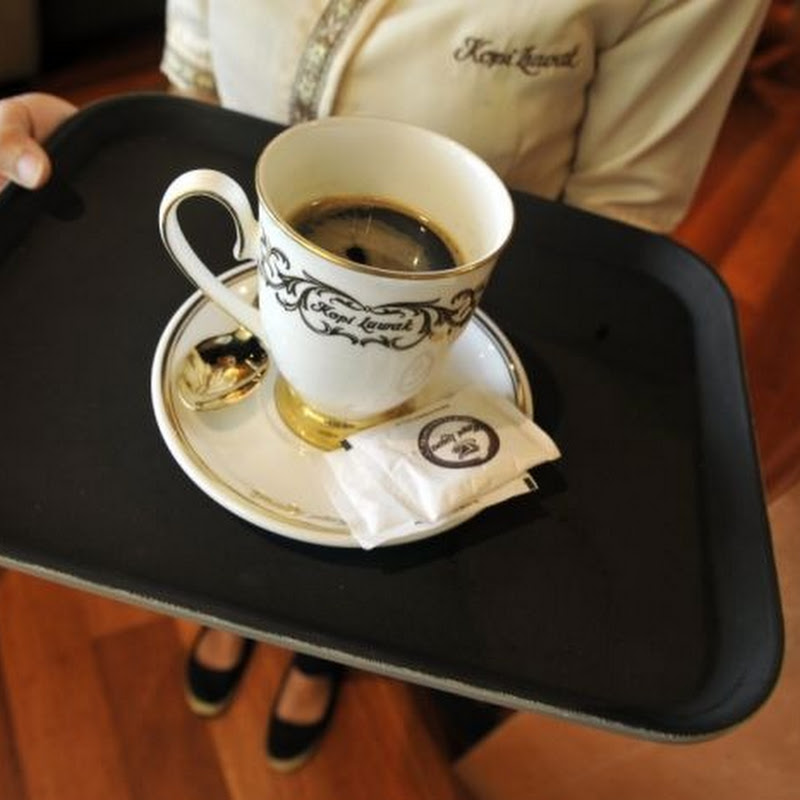 The Most Expensive Coffee in The World is Made From Animal Poop
