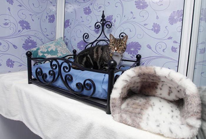 Гостиница для кошек в Москве