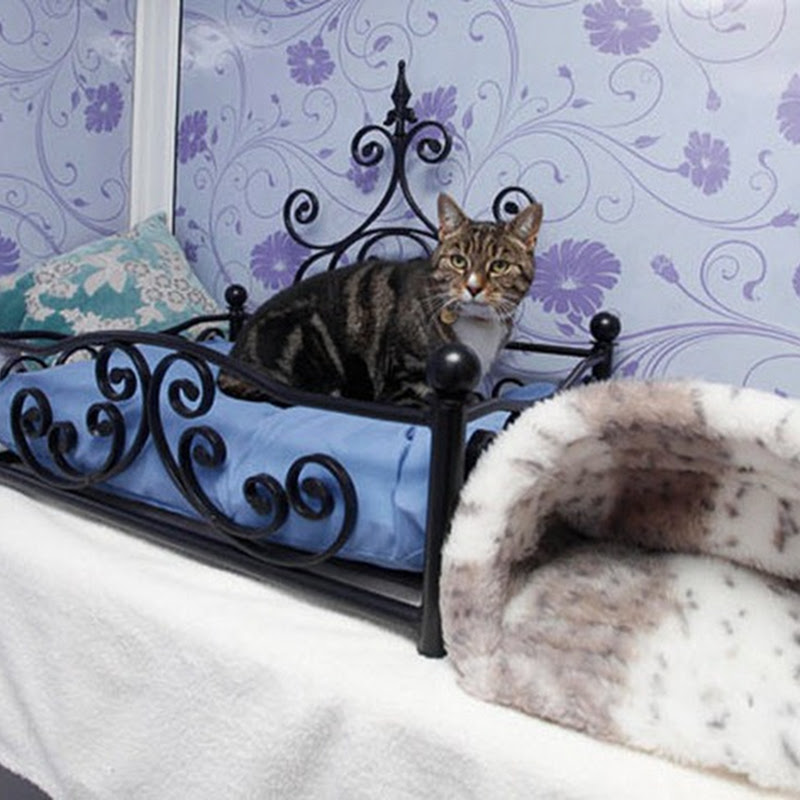 Longcroft Luxury Hotel … for Cats
