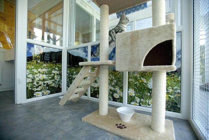 cat-hotel (6)