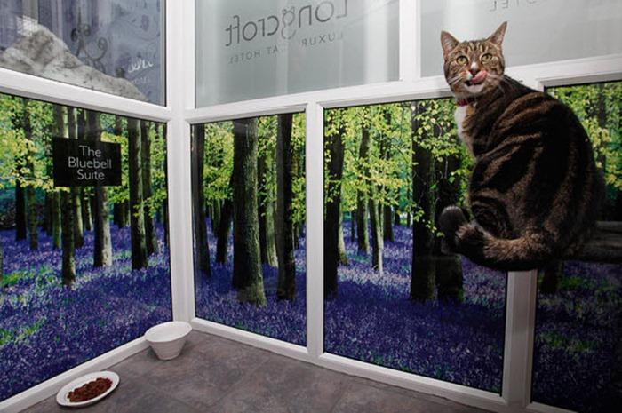 cat-hotel (7)
