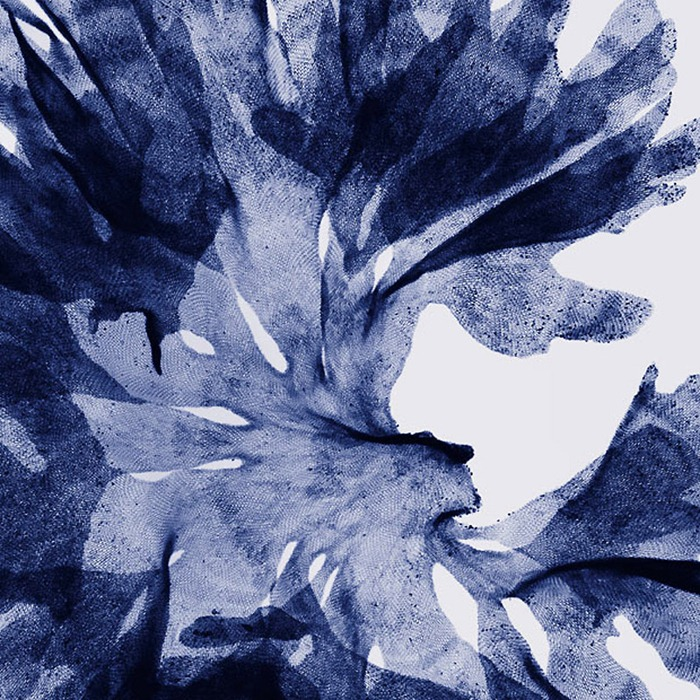 X Ray Flowers...***EXCLUSIVE*** UNSPECIFED - UNDATED: Seaweed, coloured X-ray. These mesmerising shots are the fruit of years of careful experimentation by artist Hugh Turvey, using x-rays to really get under the surface of things. The technique, which came about thanks to a chance commission from a musician friend who wanted an x-ray image, has been 14 years in the making and has now been so well honed by Hugh that his work is becoming highly sought after. The flowers are the latest in a long line of subjects, including motorbikes, suitcases and stiletto-clad feet. PHOTOGRAPH BY SPL / BARCROFT MEDIA LTD UK Office, London. T +44 845 370 2233 W www.barcroftmedia.com USA Office, New York City. T +1 212 564 8159 W www.barcroftusa.com Indian Office, Delhi. T +91 114 653 2118 W www.barcroftindia.com Australasian & Pacific Rim Office, Melbourne. E info@barcroftpacific.com T +613 9510 3188 or +613 9510 0688 W www.barcroftpacific.com