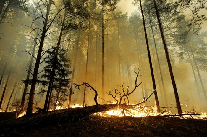 russia-forest-fire (26)