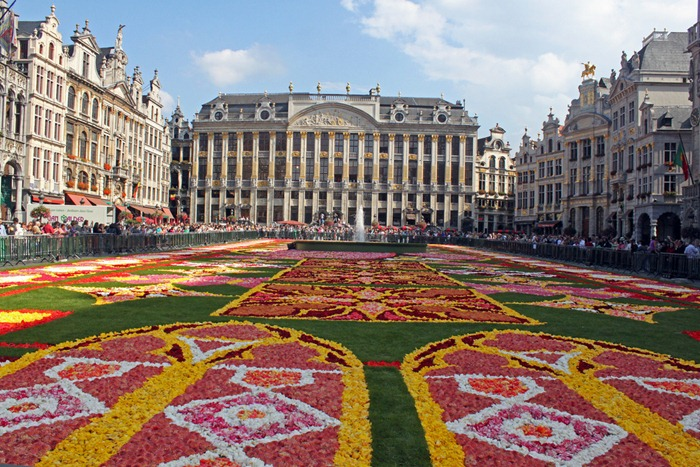 brussels-flower-carpet (2)