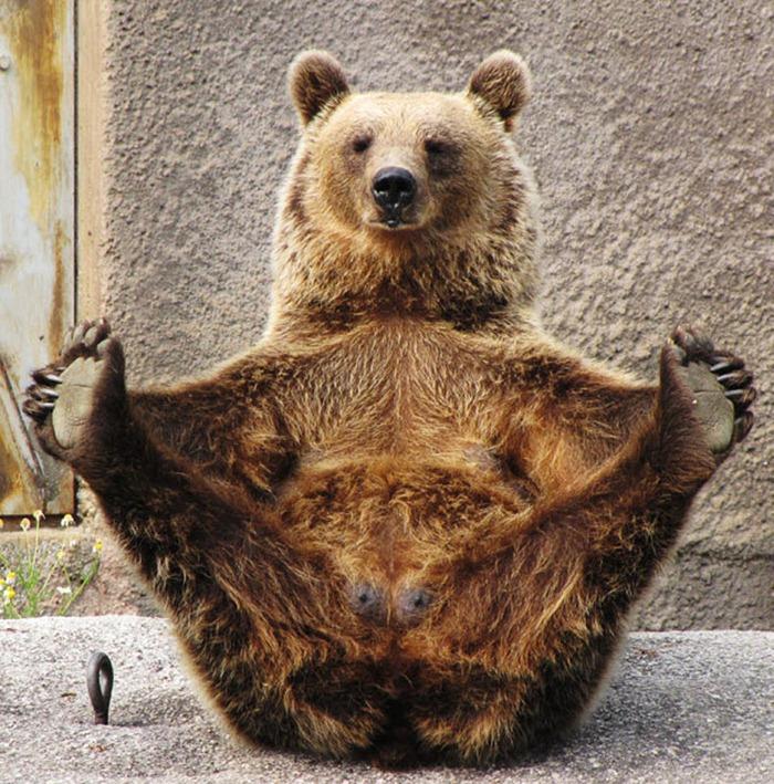 bear-yoga (1)