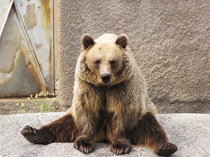 bear-yoga (7)