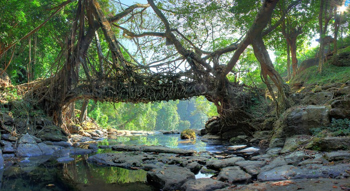 root-bridges (5)