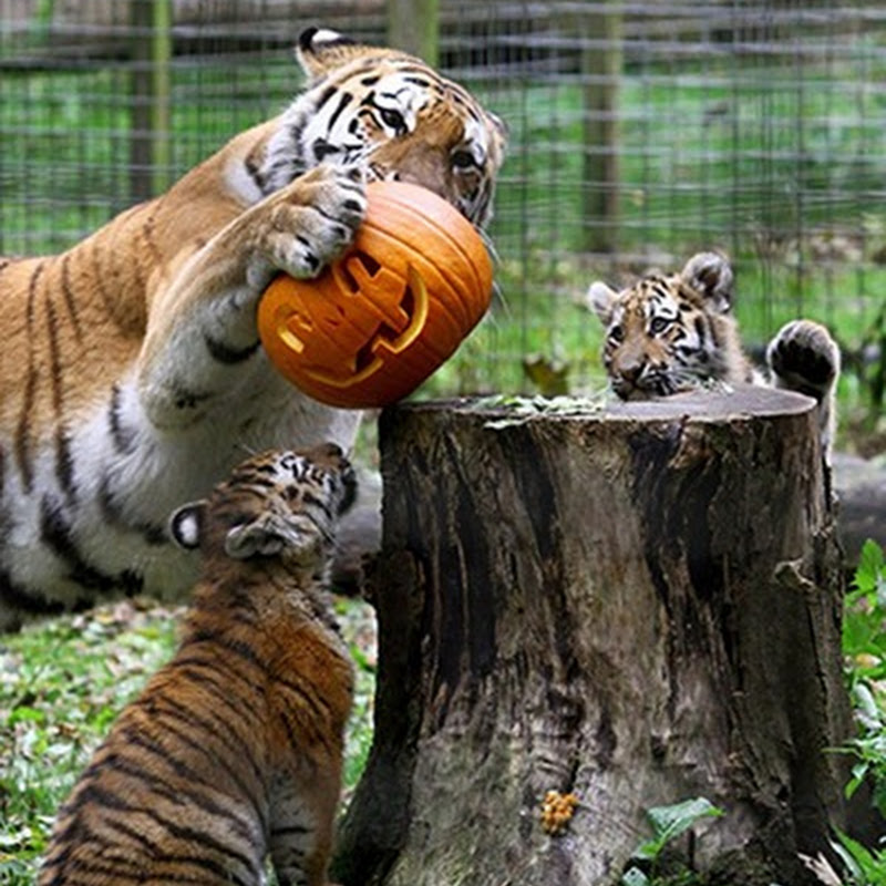 Animals Perform Tricks for Halloween