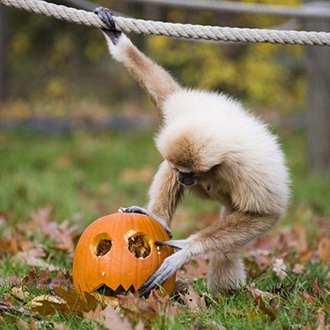 Halloween-at-Nyiregyhaza--008