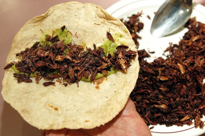 food-as-insects (3)