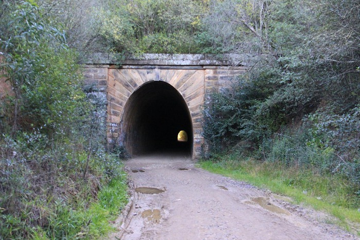 mushroom-tunnel4