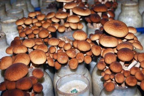 mushroom-tunnel11