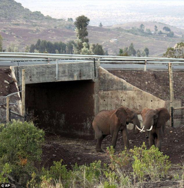 elephant-underpass2