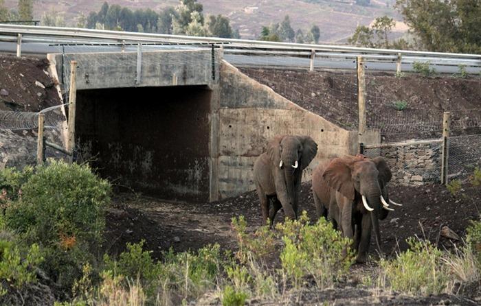 elephant-underpass3
