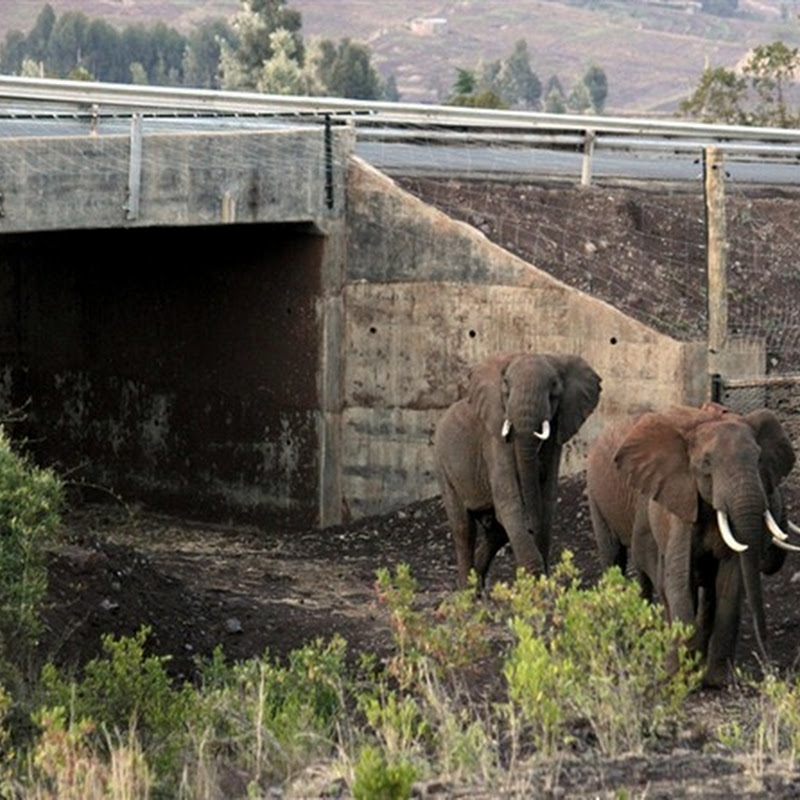 Africa's First Elephant Underpass
