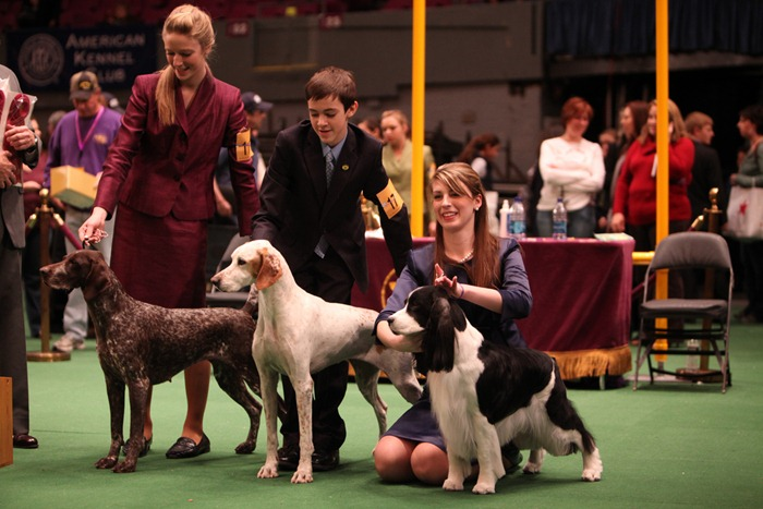 westminister-dog-show-2011006