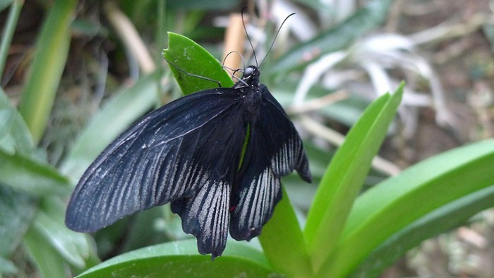 butterfly-exhibition15