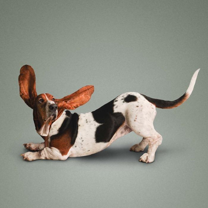 yoga-dogs6