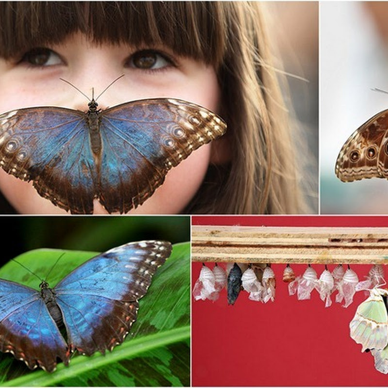 Tropical Butterflies Exhibition at London