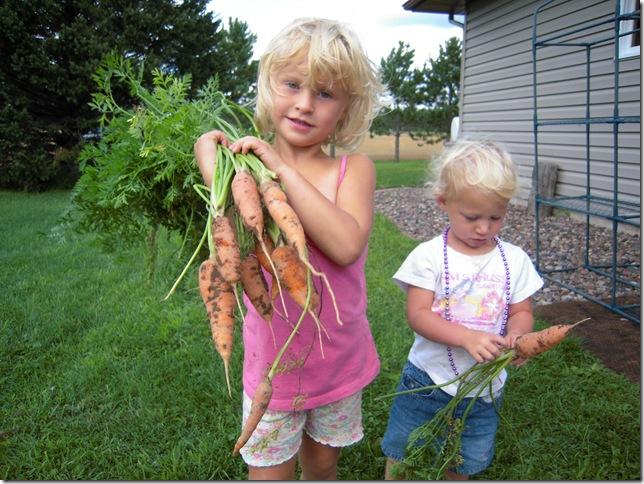 carrots 002