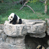 National Zoo (2006)