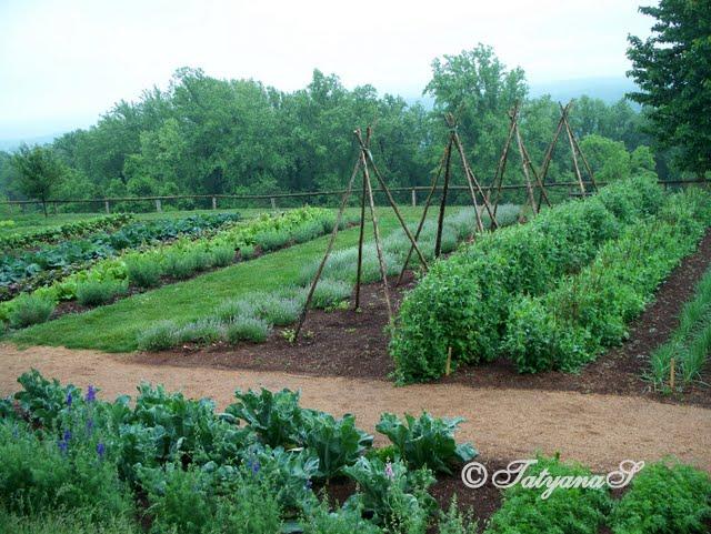 Mysecretgarden colonial gardens part 4 2 monticello for Large vegetable garden