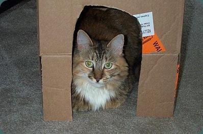 Scotchy's hideout