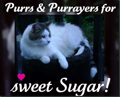 Sugar-Purrs-Purrayers