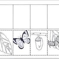 vida de una mariposa