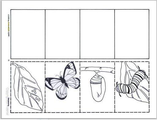 Ciclo de vida mariposa colorear - Imagui