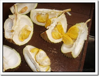 Durian-MYGopeng_20090629_2747-480