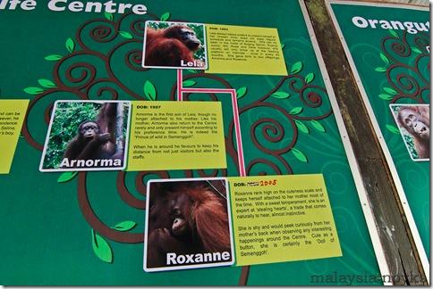 Semengoh Orangutan Rehabilitation Center 18