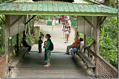 Semengoh Orangutan Rehabilitation Center 34
