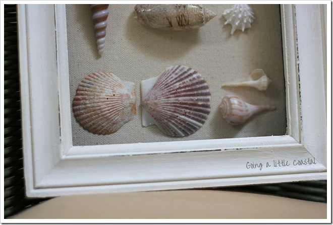 shells3