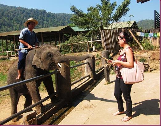mae taeng elephant park