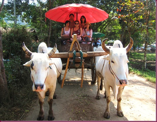 mae taeng elephant park ox cart ride