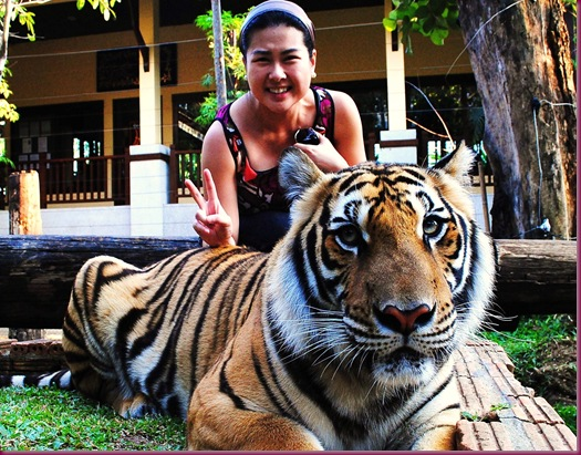 tiger kingdom chiang mai